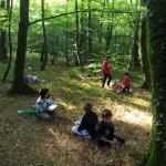 Atelier en forêt